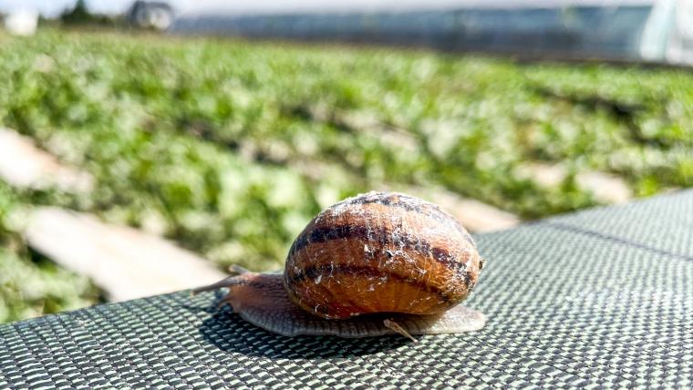 Rzeczy o ślimakach, o których nie wiecie